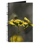 Tahquitz Canyon Wildflowers. Journal