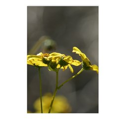 Tahquitz Canyon Wildflowers. Postcards (Package of