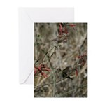 Tahquitz Canyon Hummingbird - Greeting Cards (Pac
