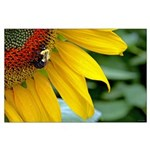 Bumblebee on Sunflower Poster