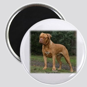 Dogue de Bordeaux 9Y201D-193 Magnet