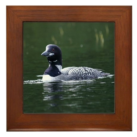 Maine Loon Framed Tile