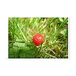 Sweet Berry Mini Poster Print