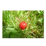 Sweet Berry Postcards (Package of 8)