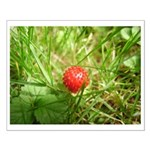 Sweet Berry Small Poster