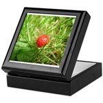 Sweet Berry Keepsake Box