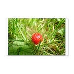 Sweet Berry 22x14 Wall Peel