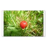 Sweet Berry Sticker (Rectangle 50 pk)