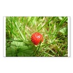 Sweet Berry Sticker (Rectangle 10 pk)