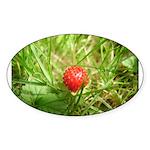 Sweet Berry Sticker (Oval)