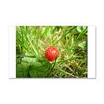 Sweet Berry Car Magnet 20 x 12
