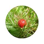 Sweet Berry 3.5