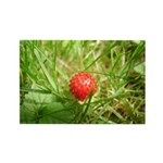 Sweet Berry Rectangle Magnet (100 pack)