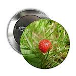 Sweet Berry 2.25