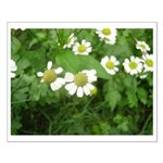 White Flower Small Poster