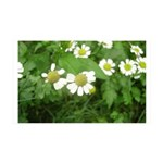 White Flower 38.5 x 24.5 Wall Peel