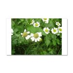 White Flower Car Magnet 20 x 12
