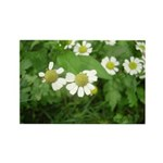 White Flower Rectangle Magnet (100 pack)