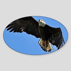 Majestic Bald Eagle Sticker (Oval)