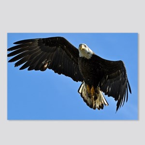 Majestic Bald Eagle Postcards (Package of 8)
