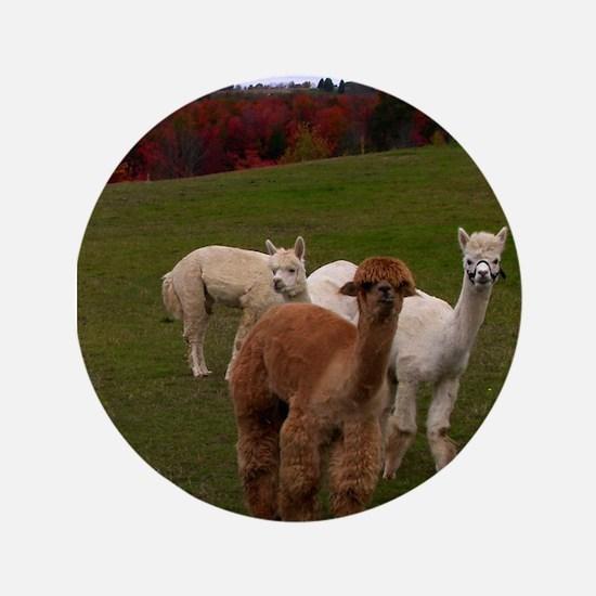 "3 Alpacas 3.5"" Button (100 pack)"