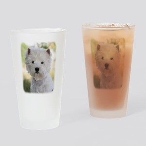 West Highland White Terrier 9Y788D-385 Drinking Gl