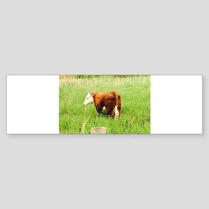 Grazing Cow 4Lena Bumper Sticker