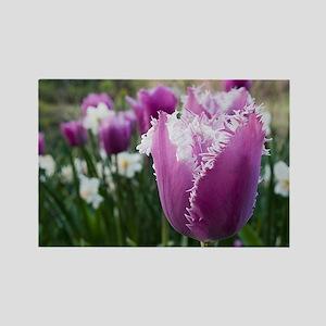 Purple Tulip Rectangle Magnet