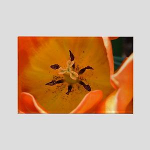 Orange Tulip Rectangle Magnet