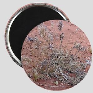 Mojave Desert #52364 Magnet