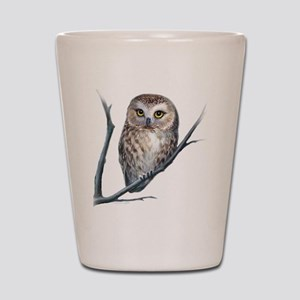saw-whet owl Shot Glass