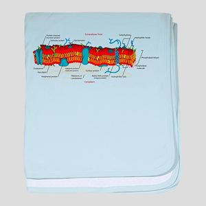Cell Membrane baby blanket