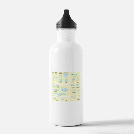 Morphology Water Bottle