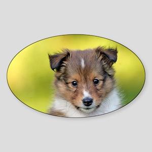 Sweet Sheltie puppy Sticker