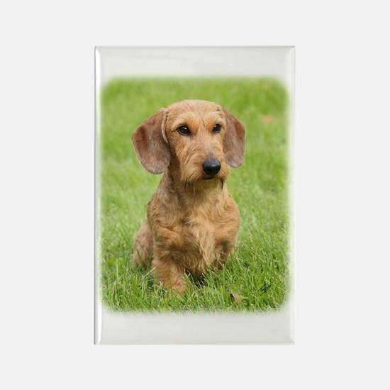 Dachshund 9Y426D-207 Rectangle Magnet