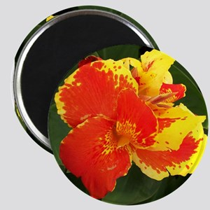 Red & Yellow Hibiscus Magnet