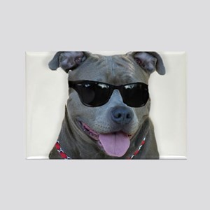 Pitbull in sunglasses Rectangle Magnet