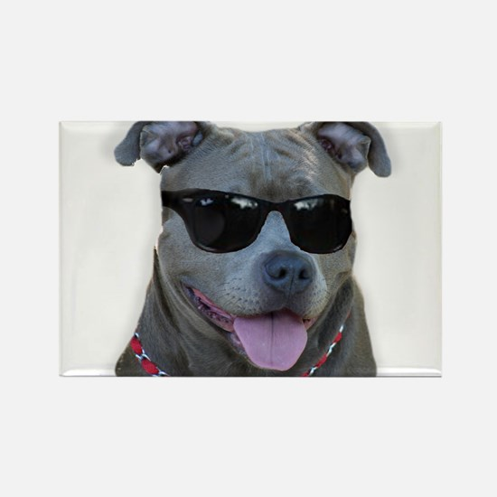Pitbull in sunglasses Rectangle Magnet