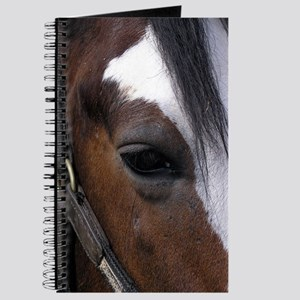 ...Horse Eye... Journal
