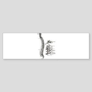 spine Sticker (Bumper)
