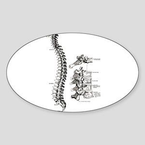 spine Sticker (Oval)