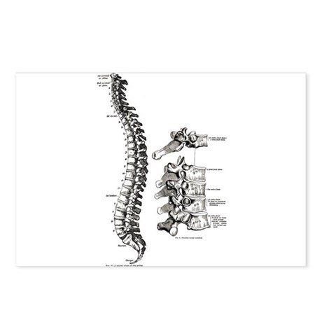 spine Postcards (Package of 8)