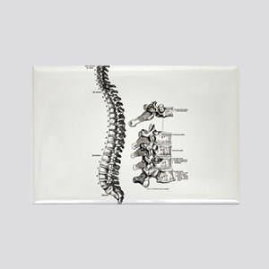 spine Rectangle Magnet