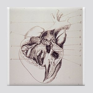 heart anatomy Tile Coaster