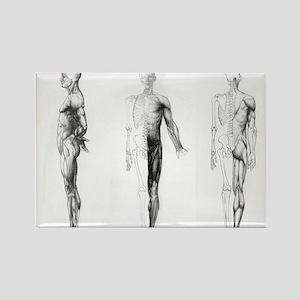 full body anatomy Rectangle Magnet