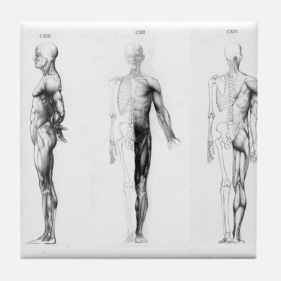 full body anatomy Tile Coaster