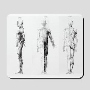full body anatomy Mousepad