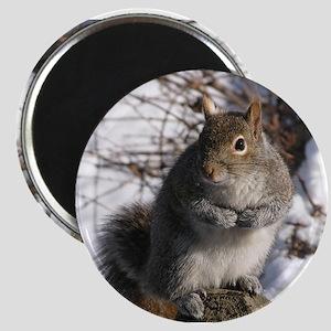 Gray squirrel Magnet