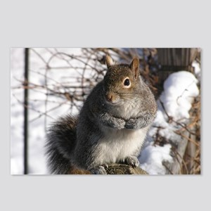 Gray squirrel Postcards (Package of 8)