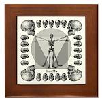 leonardo skull Framed Tile
